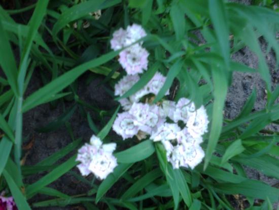 Какие цветы неприхотливые фото
