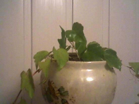 Я была весьма удивлена тем, что.  Плющ.  На время летних каникул школьные. растение. растения. было высажено.