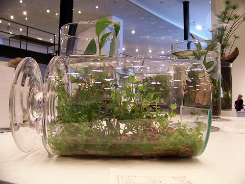 Сад в бутылке растения комнатные