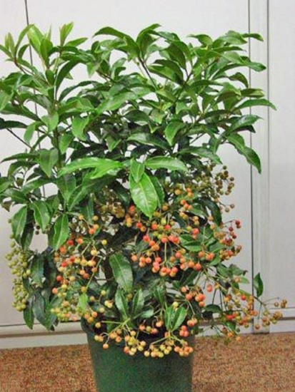 Комнатные цветы и растения на букву а