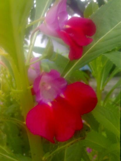 Обмен комнатными растениями
