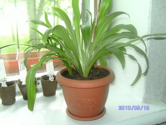 Как оздоровить комнатное растение