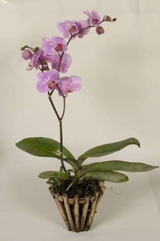 5). показать все фото сразу. продано.  Куплю орхидею, можно в состоянии покоя, рассмотрю любые варианты.