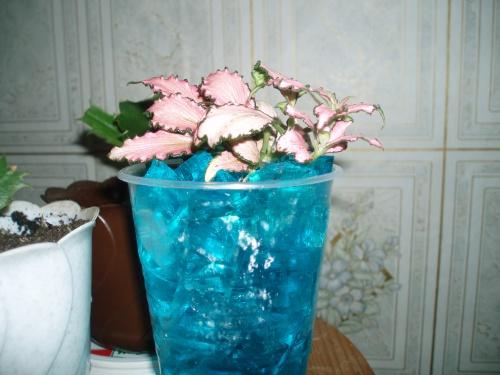Можно ли орхидею сажать в гидрогель 45