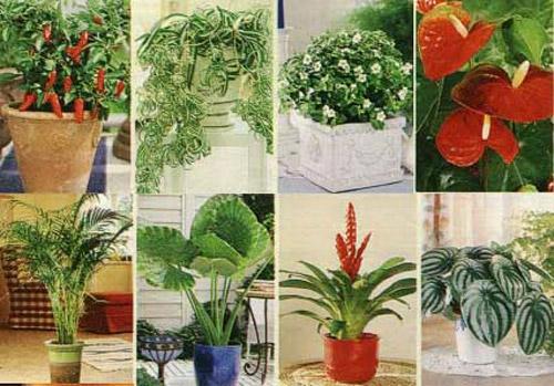 Выбери правильное комнатное растение