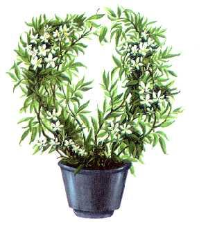 комнатные растения лилия фото и названия