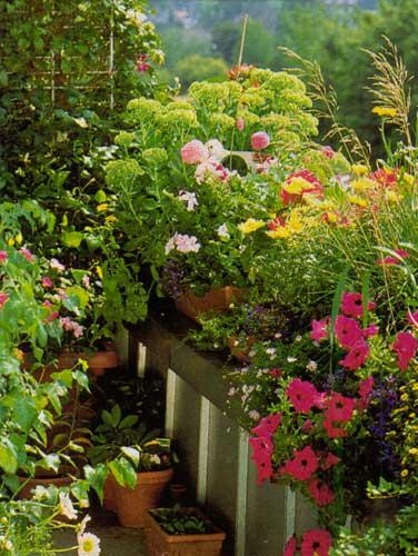 Цветы на балконе это отрада для души